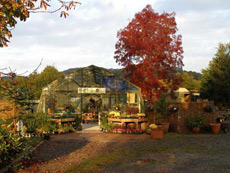 View of Cove Garden Nursery in Autumn