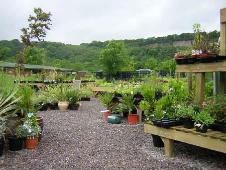 Cove Garden Nursery Tiverton Devon Home