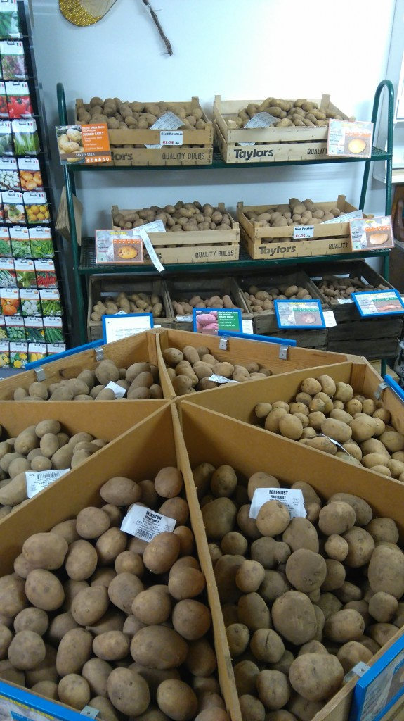 Part of our Seed potato selection 2017